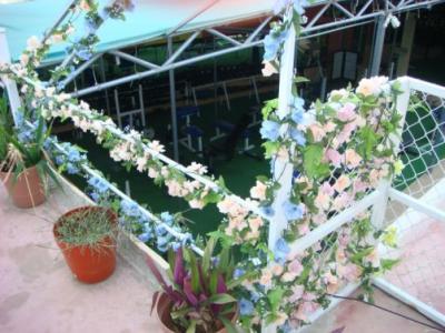 Maravilla Campechana #2: Los Jardines Colgantes de Panchito Brown